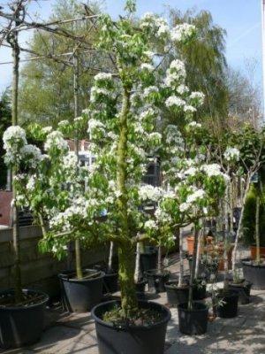 Kleine Bomen Voor In De Tuin.Tuincentrum Frits Janssen